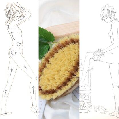 body brushing - spazzolatura col tampico
